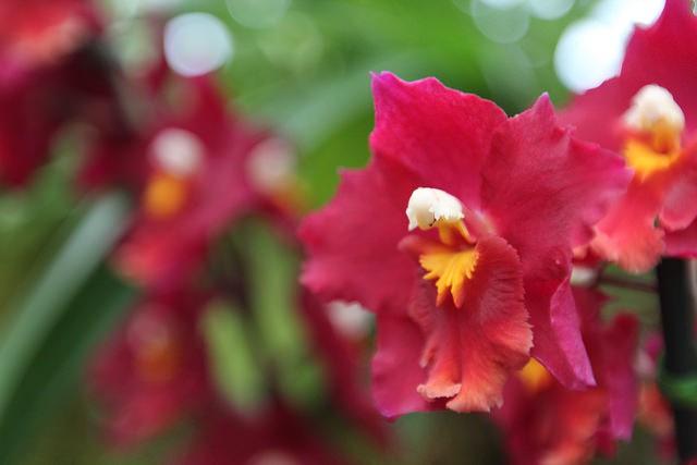 Jardín Ecuagenera de orquídeas en Cuenca