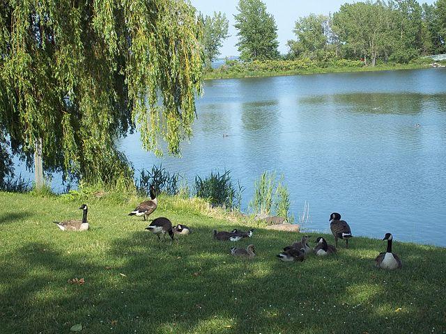 Rapides Park en Montreal