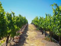 Sonoma, el mejor destino vinicola de California