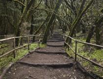 El Parque de Garajonay de La Gomera, un rincón mágico de Canarias