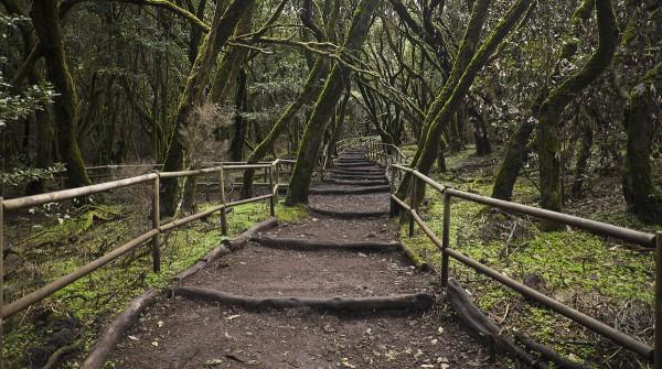 Los bosques húmedos del Parque Garajonay de La Gomera