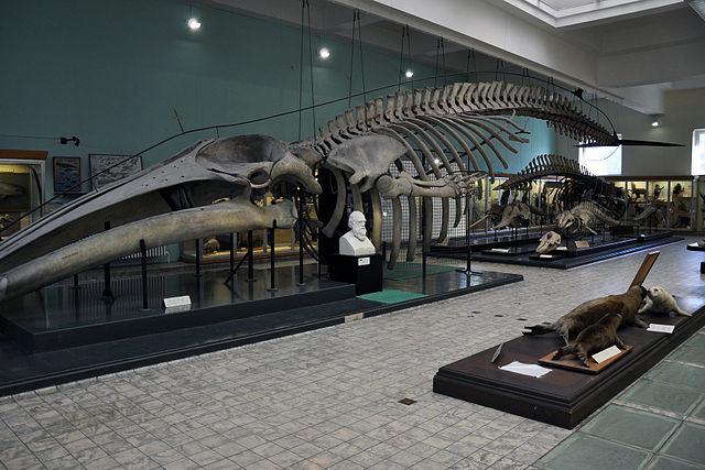Aquarium de Lieja