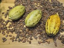 Sendero del  Cacao en San Pedro de Macorís