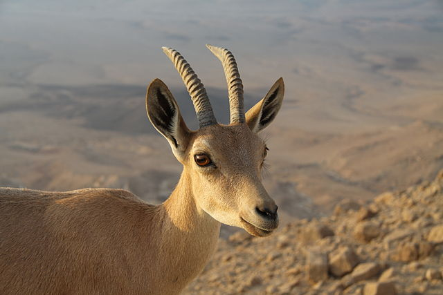 Monte Karkom en Negev
