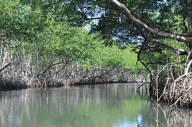 Parque Nacional Los Haitises en República Dominicana
