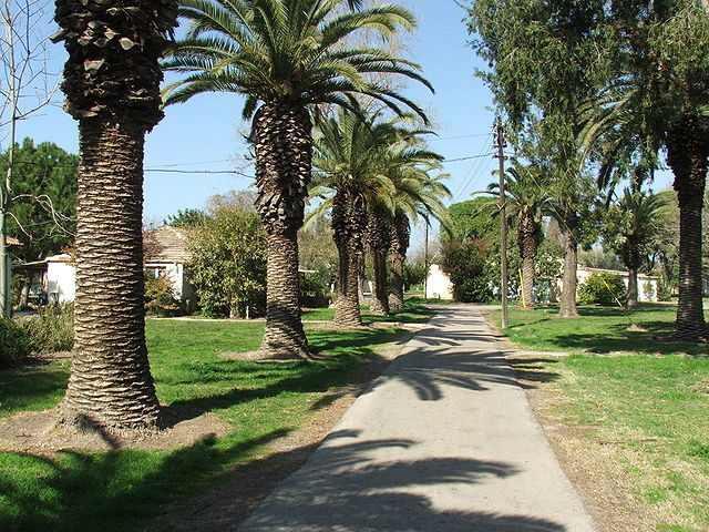 Museo The Old Courtyard en Kibbutz Ein Shemer