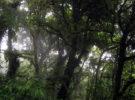 Reserva Biológica del Bosque Nuboso de Monteverde