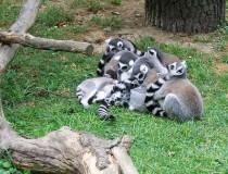 Zoológico de Lesna en Zlín