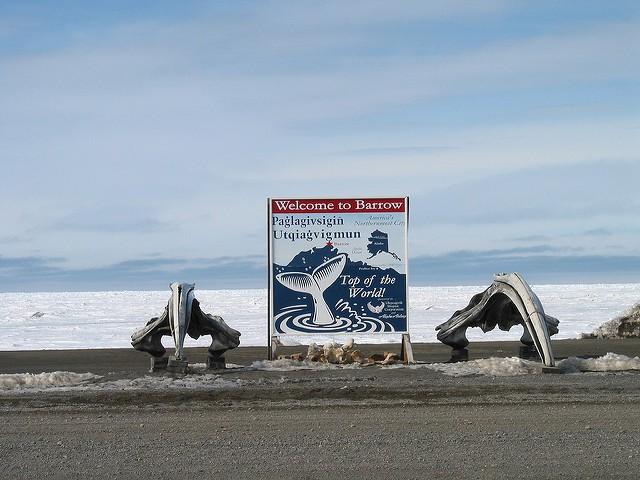 Avistamiento de ballenas en Barrow