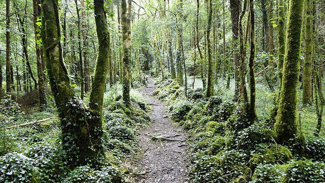 Reserva Natural Dromore Wood