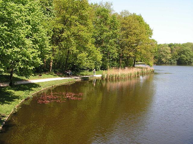 Bosque de La Haya