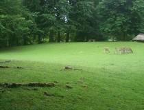 El Parque de los Ciervos de Aalborg