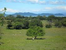 Parque Nacional de Diriá