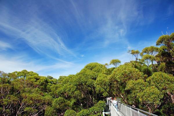 Árboles enormes en el Valle de los Gigantes de Australia