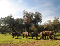 La Ruta del Jamón Ibérico de la Dehesa de Extremadura en Badajoz