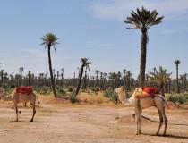 Galería Re en Marrakech