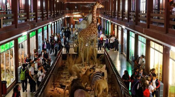 Museo de Ciencias Naturales El Carmen, la naturaleza de todo el mundo al alcance en Onda