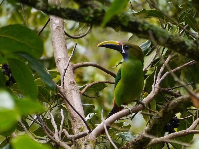 Parque Nacional de Los Quetzales