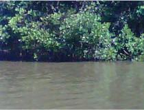 Río Higuamo en San Pedro de Marcorís