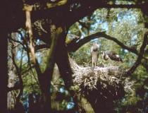 Bosque Gemenc en Hungría