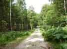 Bosque de Gribskov en Dinamarca