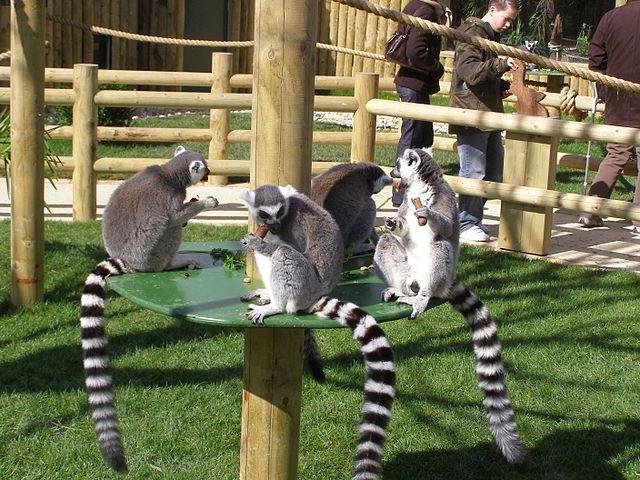 Parque Zoológico Drusillas