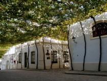 Bodegas Tío Pepe, las bodegas más famosas de Jerez