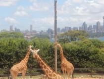 Taronga Zoo, el parque zoológico de Sidney