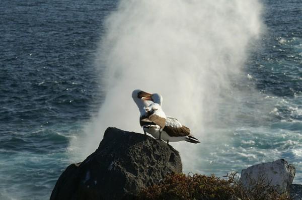 Galápagos registró incremento de visitantes en 2015