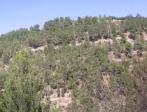 Bosque de Jerusalén