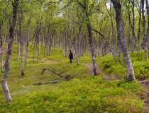 Mejores destinos para el turismo verde en Europa