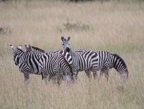 Notable presencia de turistas en Kenia