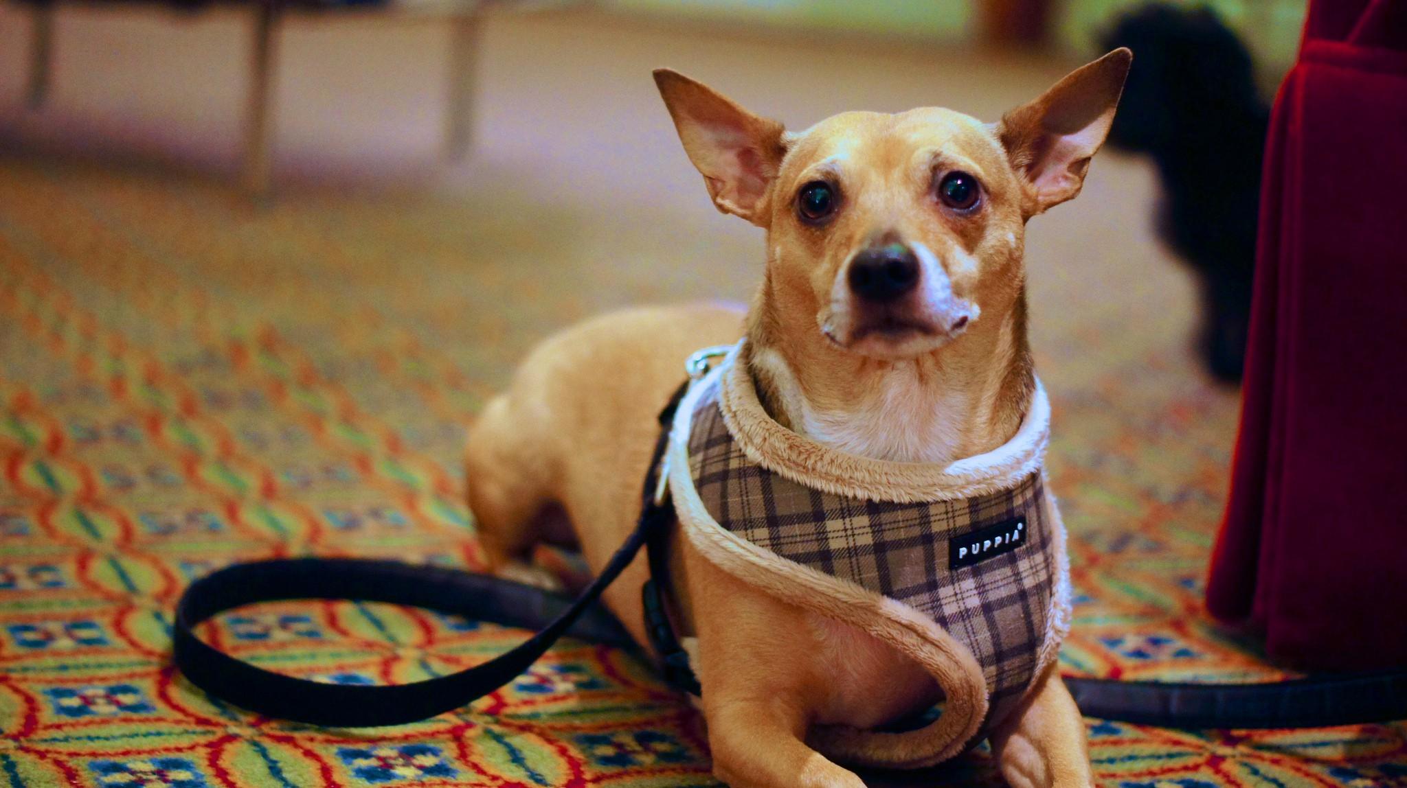 Viajar con mascotas en españa