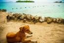 Viajar con perros y otras mascotas por España