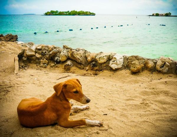 playas_para_perros