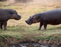 Anímate a un safari por África