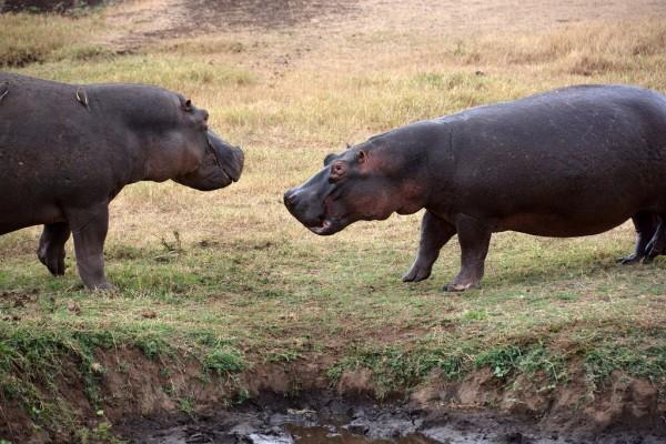 Una forma de conocer animales en sus hábitats