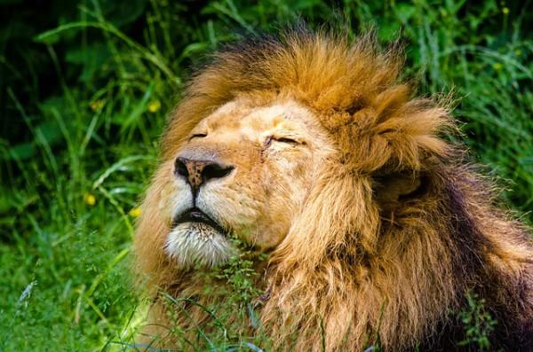 El Zoológico de Londres ofrece nueva experiencia a los visitantes