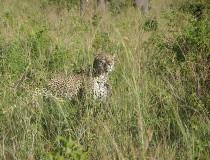 Los 4 safaris más destacados de Kenia