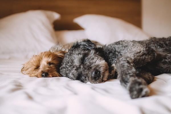 Sercotel ofrece 45 hoteles Pet Friendly en España y Andorra
