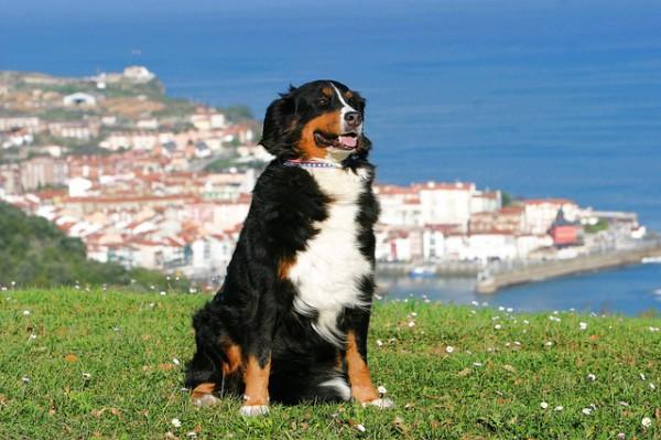Paradores de Turismo, alojamientos pet-friendly