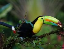 Ruta para fomentar el Aviturismo en Costa Rica