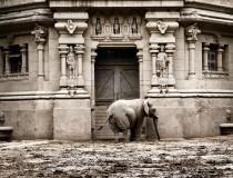 El zoo de Buenos Aires se convertirá en un ecoparque