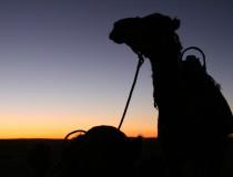 Una aventura inolvidable: la travesía por el desierto de Túnez