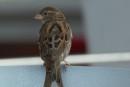 Avistaje de aves en República Dominicana