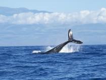 Costa Rica albergará el Festival de las Ballenas en 2016