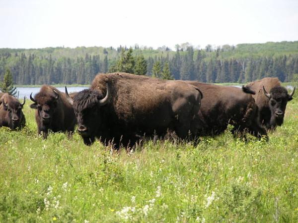 Las 5 visitas para hacer en Manitoba