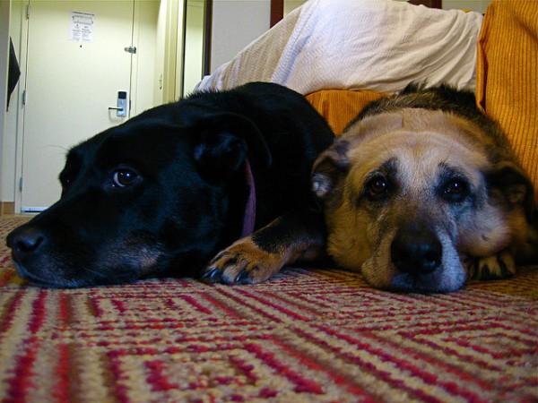 hoteles-admiten-perro