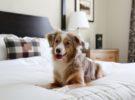 Normas para alojarse con perros en hoteles españoles