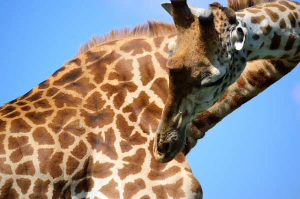 Las 4 visitas para disfrutar en Nairobi